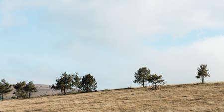 Hillside meadow in the mountains 版權商用圖片