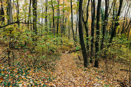 View of the forest in autumn