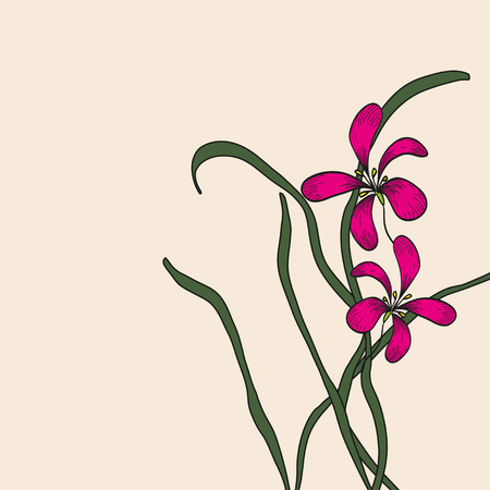 folkways: Chinese doodle element drawing pink orchid on background. Vector illustration. Illustration