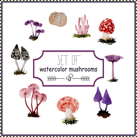 boletus: Set of watercolor mushrooms. Vector illustration for design of catalog, card, packaging and other.