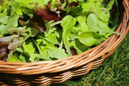 Gerade ausgew�hlte Sommersalat in den Warenkorb legen
