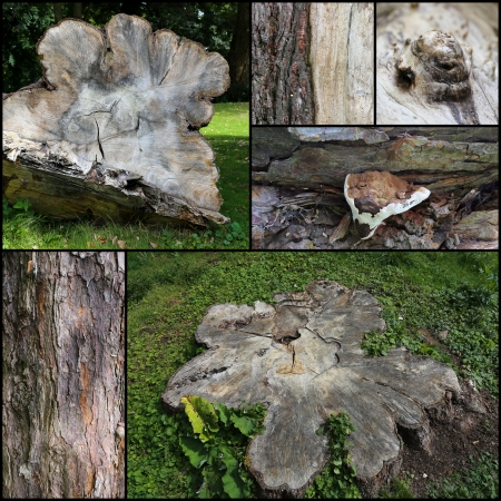 Old tree trunk set collage collection black frame photo