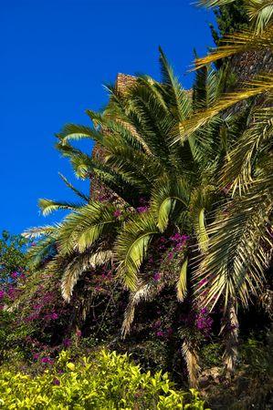 Árbol de la palma con flores de color púrpura a su alrededor en Málaga, España Foto de archivo - 5089978