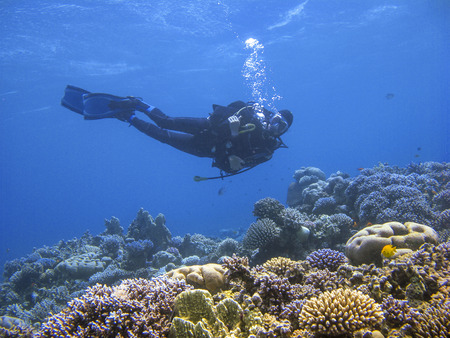 Underwater photography of a scuba diver swimming above the coral reef at dive site Ras Abu Galum in Dahab, Egypt.