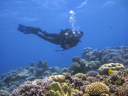 Unterwasserfotografie eines Tauchers, der über dem Korallenriff am Tauchplatz Ras Abu Galum in Dahab, Ägypten, schwimmt.