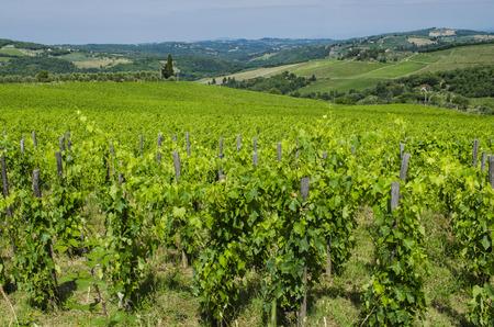 vineyard chianti tuscany countryside Stock Photo