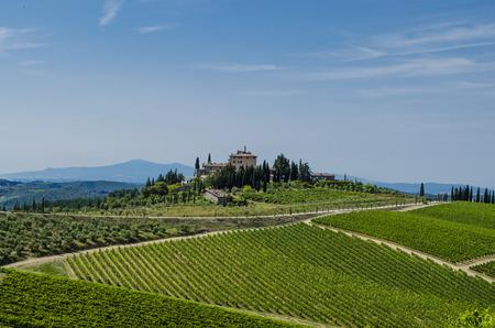 vineyard chianti tuscany italy Stock Photo