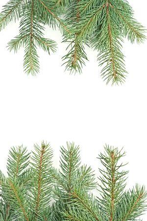 christmas motive: isolated on white background pine branches christmas motive Stock Photo