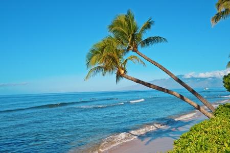 Palmier et l'océan Pacifique plage de Maui Hawai