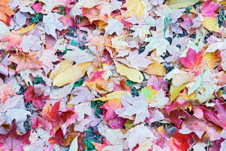 autumn in the park, Colorful leaves foliage