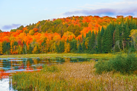 Lake in Algonquin Park. Fall colors reflection on the lake. Stock Photo