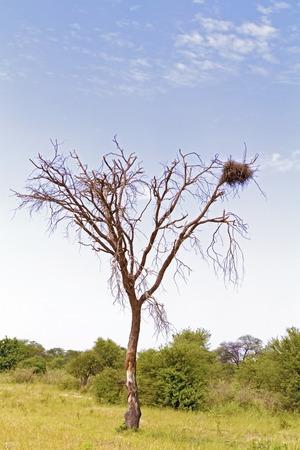 botswana: Landscape and trees in Botswana near Nata