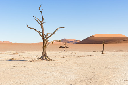 remnant: Dead Vlei, or dead marsh, is located near Sossusvlei in the Namib-Naukluft National Park, Namibia. It is the remnant of an ancient and intermittently flooded marsh. These trees died from lack of water but have been preserved by the desert climate.The ligh