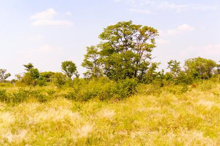 nata: Landscape and trees in Botswana near Nata