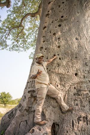 botswana: Nata, Botswana - April 14, 2015: Near Nata in Botswana the man posing with baobab tree. Editorial