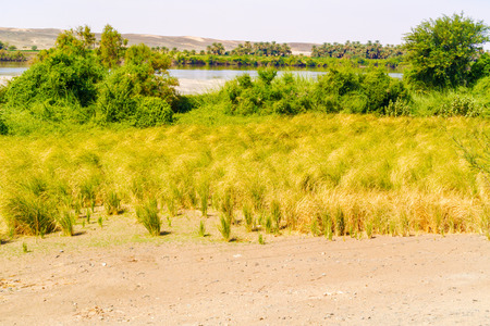 the nile: Rural landscape and the river Nile in Sudan south of Wadi Halfa.