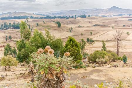 ali: Rural landscape of the farmland near Ali Doro in Ethiopia Stock Photo
