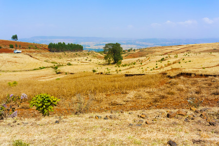 farmlands: Rural landscape of the farmlands near Amanuel  in Ethiopia