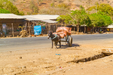 house donkey: Donkey is pulling cart in a small village Negade Bahir in Ethiopia.