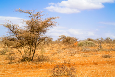 ethiopia: Trees and the rural landscape near Yabello in Ethiopia. Stock Photo