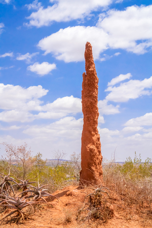 mound: Huge termite mound of red earth near Yabello  in Ethiopia