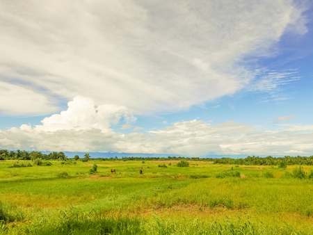 Picturesque rural landscape and farmland fields in Segera in Tanzania. Stockfoto