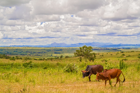 View at picturesque rural landscape near capita city of Malawi, Lilongwe