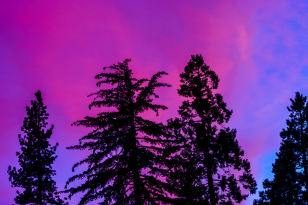 kings canyon national park: Sunset sky over the giant trees in Kings Canyon National Park in California, USA.