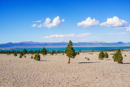 mono: Pine trees on gravel slope, Mono Lake, California, USA Stock Photo