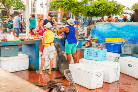 fish vendor: Puerto Ayora, Galapagos, Ecuador -April 6, 2016: People buying fish at Puerto Ayora fish market. Pelicans patiently waiting for their treat and sea lion helping over the counter while the fishmonger takes care of the female shopper.