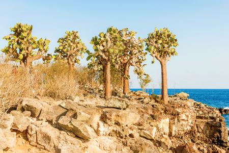 galapagos: cactus forest and ocean at Galapagos island of Santa Fe. Stock Photo