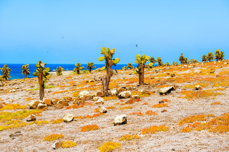 cactus forest and ocean at Galapagos island of Santa Fe. Imagens