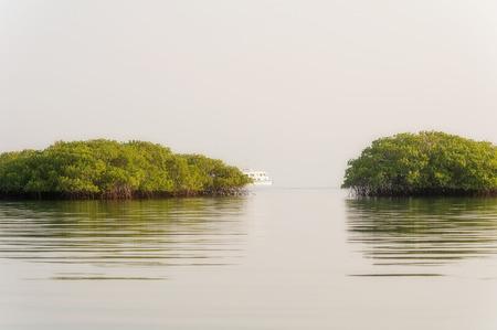 Trees in the water formed small island in the lagoon on Santa Cruz island in Galapagos.