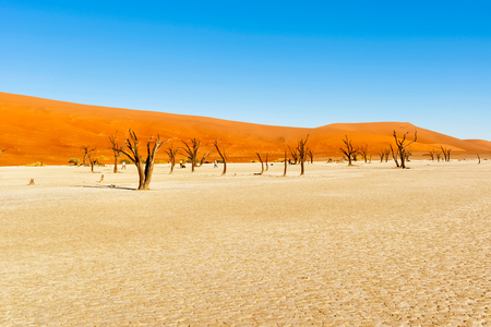 Dead Vlei, or dead marsh, is located near Sossusvlei in the Namib-Naukluft National Park, Namibia. It is the remnant of an ancient and intermittently flooded marsh. These trees died from lack of water but have been preserved by the desert climate. The lig Stock Photo