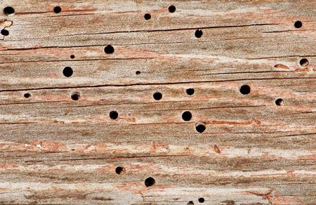 Woodworm Holes