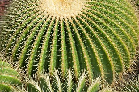 Closeup of Cactus Фото со стока