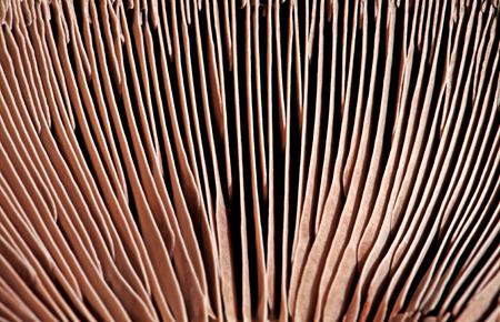 Mushroom Closeup Фото со стока