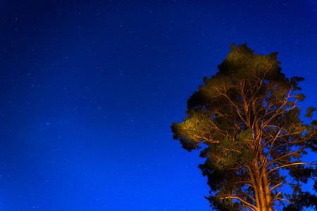 Tree in the night sky photo