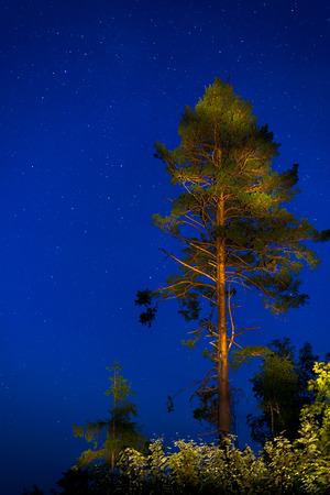 Tree in the night sky