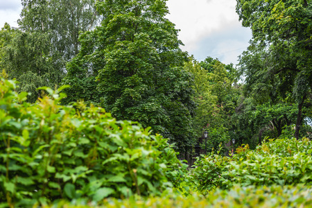 City garden photo