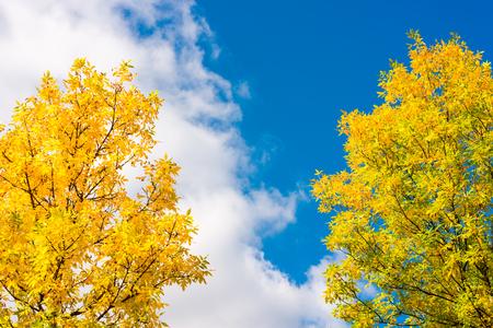 구름과 하늘에 햇볕에 쬐 인 나무