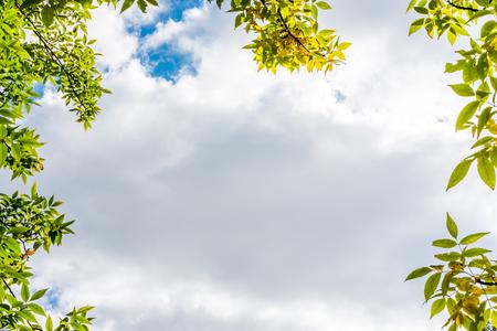 배경 흐린 하늘에 나뭇잎 프레임입니다. 파란색 소프트 토닝의 이미지