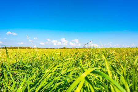 草原の上の雲.地上からの眺め