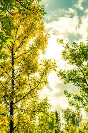 정원에서 나무를 통해 스트리밍하는 태양의 광선. 노랑 - 녹색 토닝의 이미지 스톡 콘텐츠