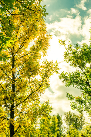 Strahlen der Sonne durch die Bäume im Garten. Bild in gelb-grüne Tönung Standard-Bild - 46153789