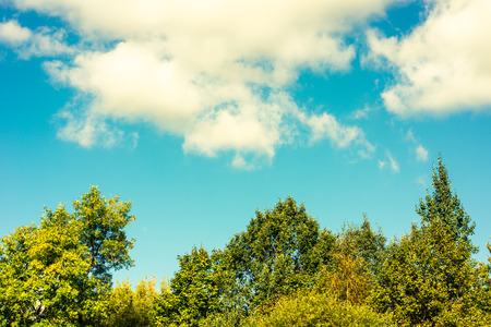 The trees in the forest against the blue sky with clouds Standard-Bild