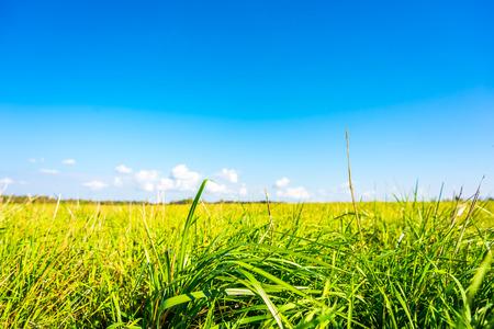 草原の上の雲.草に焦点を当てる、地表面から見る