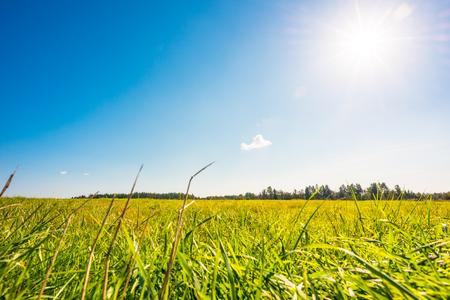牧草地、草の上の露の雲と午後の日差し。草に焦点を当てる、地表面から見る