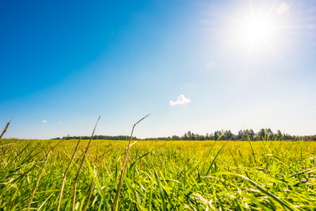 초원, 잔디 에이 슬 구름 위에 오후 태양. 지상 수준에서보기, 잔디에 초점 스톡 콘텐츠