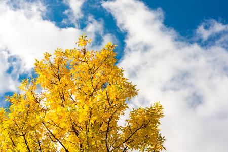 空の雲と太陽に照らされた木。黄-青の調色のイメージ
